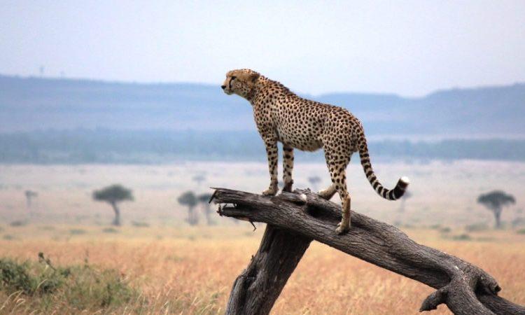 6 Days Masai Mara safari