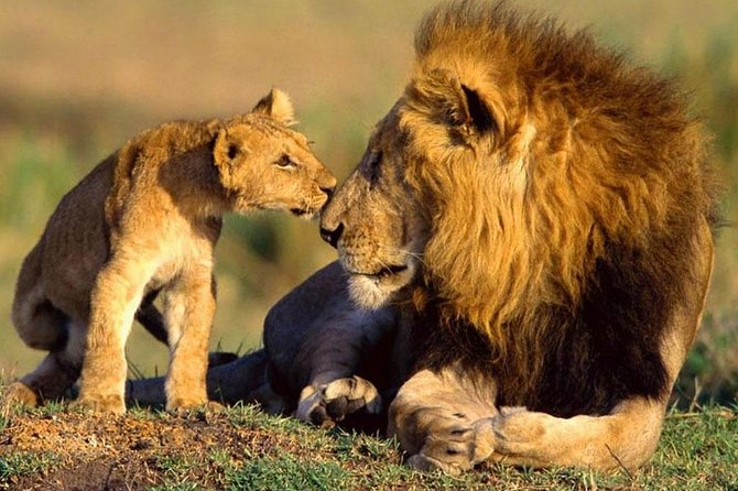 9 Days Best Kenya safari