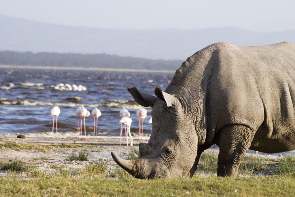 Best time to Visit Lake Nakuru National Park