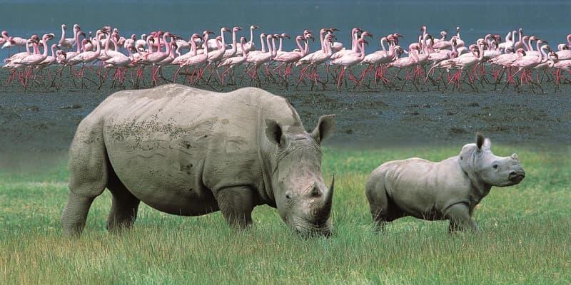 Entrance fees for Lake Nakuru National park