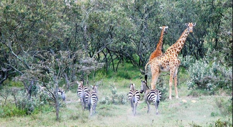 hell's gate national park wildlife