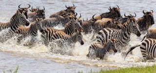 4 Days Tarangire and Manyara safari