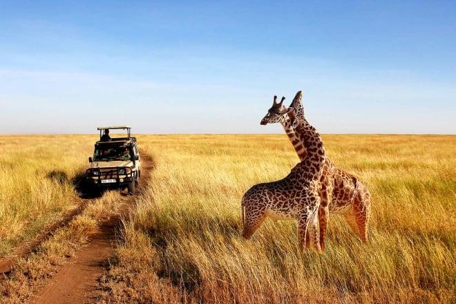 5 Days Best of Tanzania and Kenya safari
