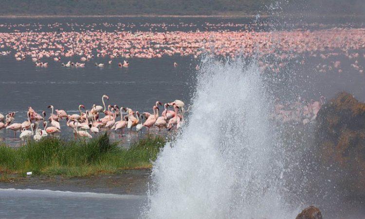 2 Days Lake Nakuru and Lake Bogoria safari