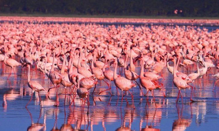 Attractions in Lake Nakuru National Park