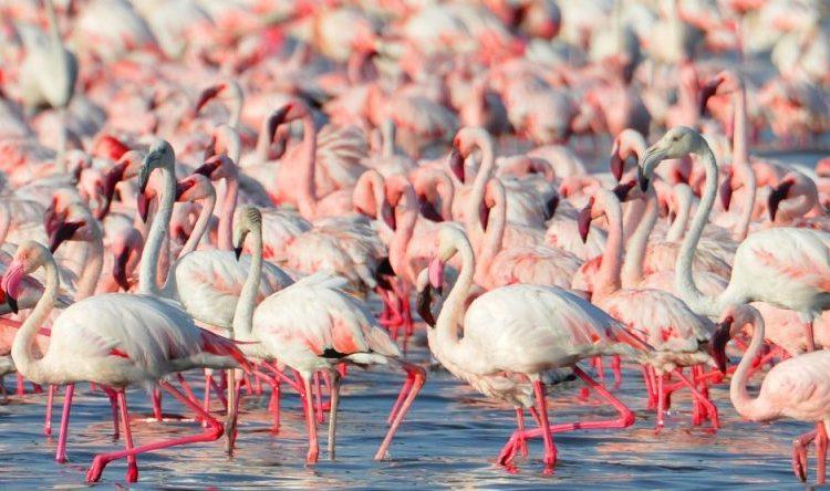 13 Facts about Lake Nakuru National Park