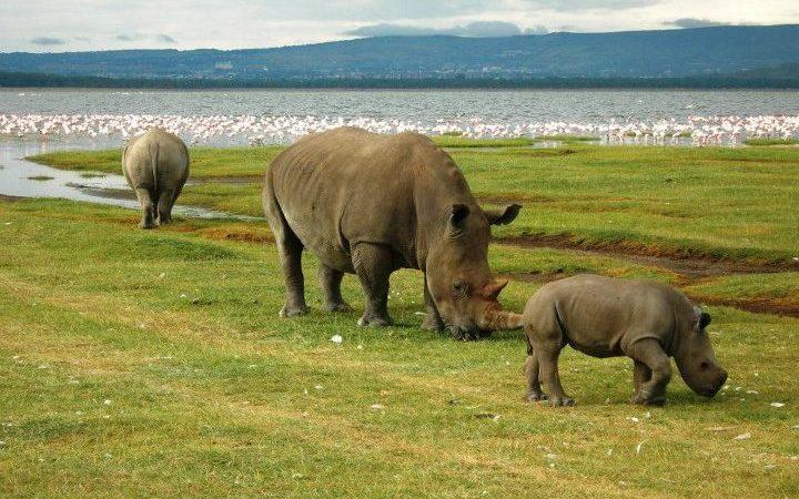 Tourist Activities in Lake Nakuru National Park