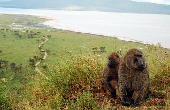 Baboon Cliff in Lake Nakuru National Park