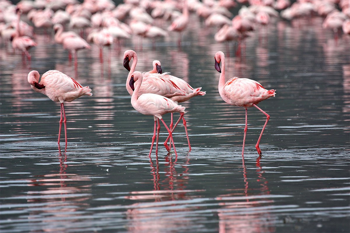 Extension of Kenya Wildlife Services conservation fees