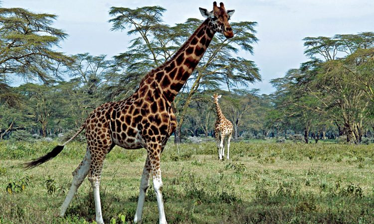 Out of Africa Lookout in Lake Nakuru National Park