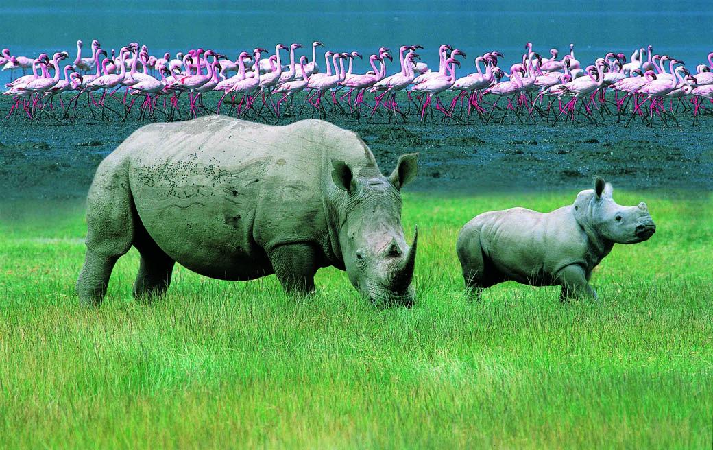 The Rhino Sanctuary in Lake Nakuru National Park