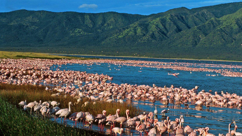 Lake Elementaita | Kenya Safari Destinations