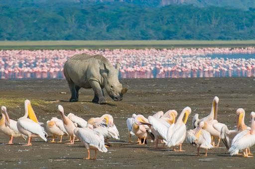 Birding in Lake Nakuru National Park