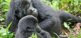 5 days Congo Gorilla trekking and Nyiragongo hike safari