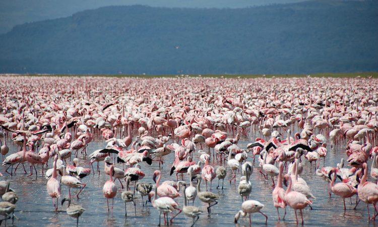 Attractions in Nakuru County