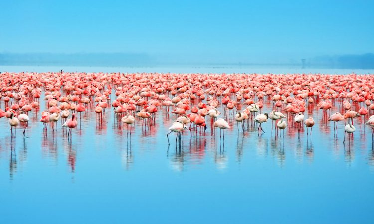 Best time to see Flamingos