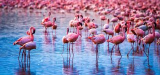 The Wonders of Lake Nakuru National Park