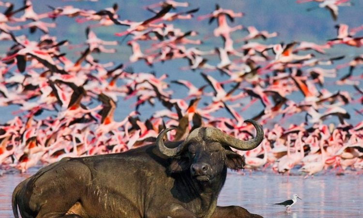 3 Days Lake Nakuru National Park Safari