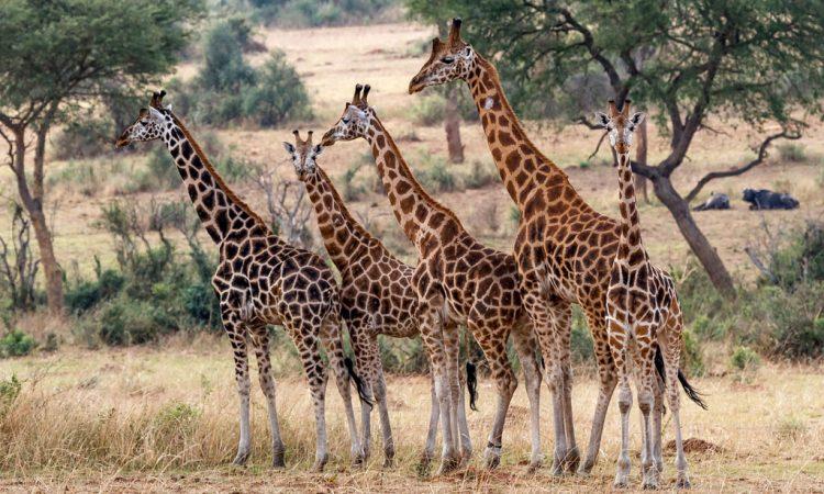 3 Days Lake Nakuru and Hell's Gate Wildlife Safari