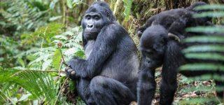 4 Days Bwindi Gorilla Trekking and Lake Bunyonyi safari