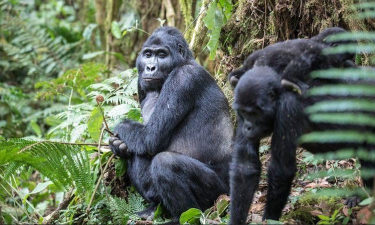 3 Days Gorilla Trekking Rwanda Safari Tour