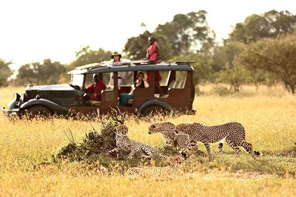 5 Days of Lake Naivasha, Crescent Island & Maasai Mara Wildlife Safari