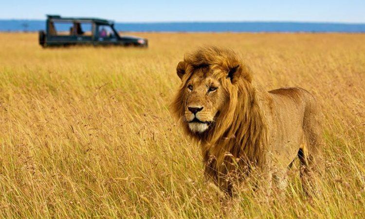 6 Days Amboseli, Lake Nakuru & Masai Mara Wildlife tour