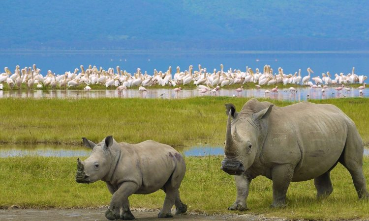 5 Days Lake Nakuru and Maasai Mara Wildlife Safari