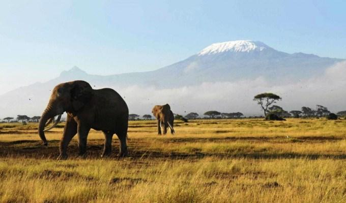 6 Days Masai Mara, Lake Nakuru & Amboseli Safari