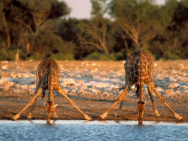 7 Days Best Of Kenya Wildlife Safari