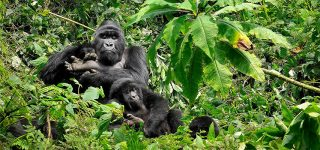 6 Days Uganda Luxury Safari (Gorilla trekking, Wildlife, and chimpanzees)