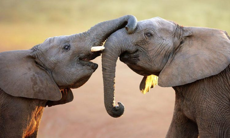 7 Days Kenya Wildlife Safari Tour
