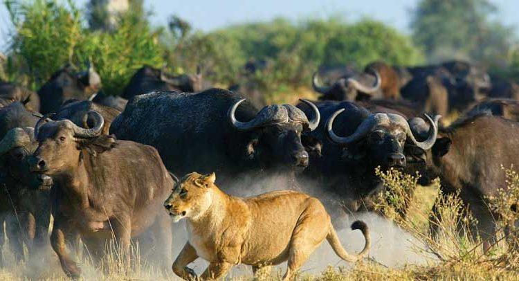 6 Days Kenya Wildlife Adventure Safari (Nairobi City, Amboseli National Park, Maasai Mara Game Reserve, and Lake Naivasha)