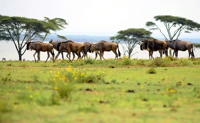 6 Days Lake Nakuru, Amboseli & Tsavo West Wildlife Safari