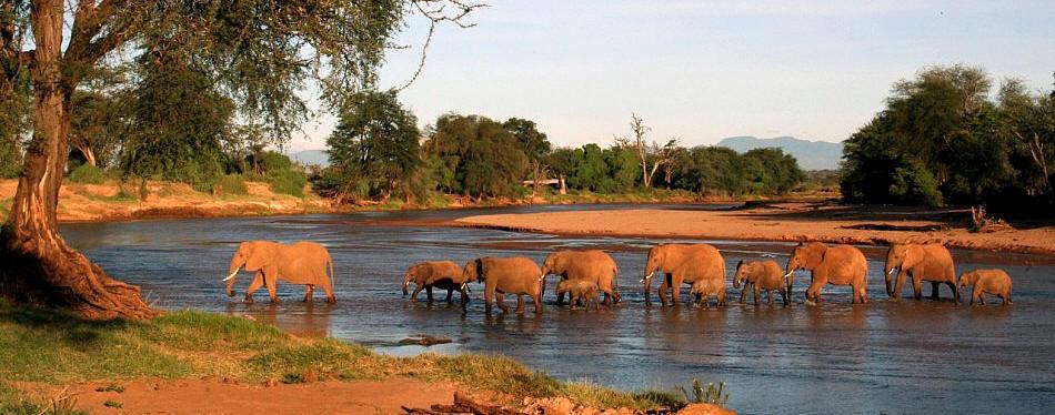 5 days Samburu, Lake Nakuru and Lake Naivasha Safari