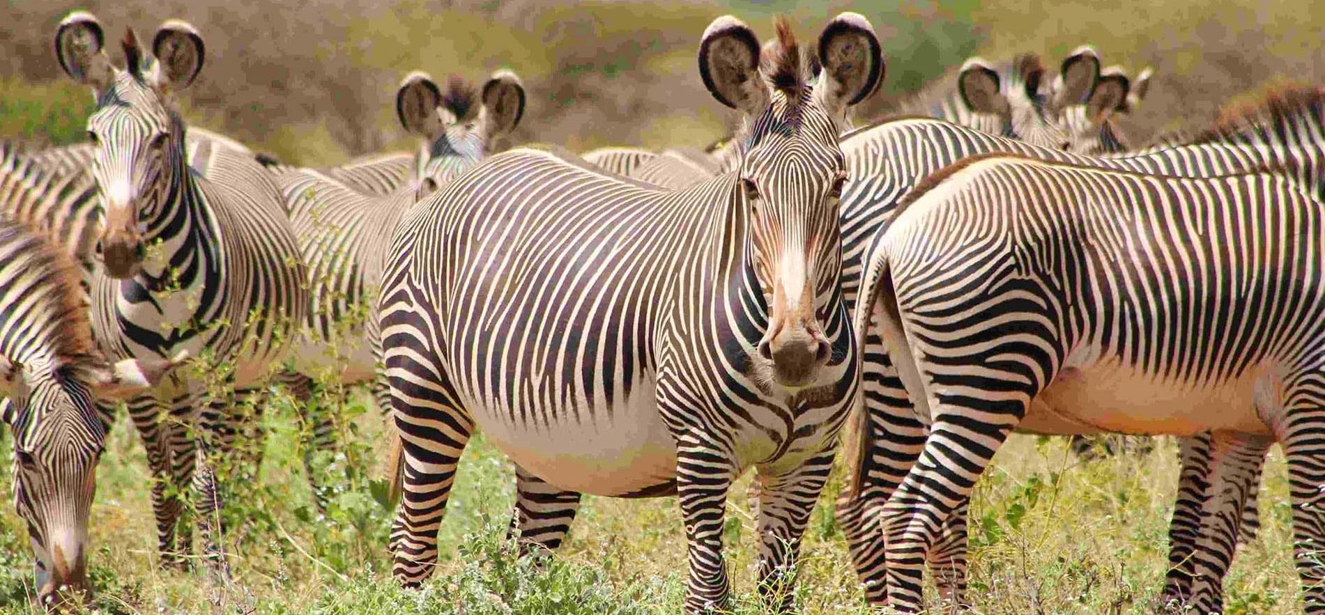 12 days Nairobi, Masai Mara, Lake Nakuru, Masai Mara, Naivasha, Ol Pejeta, Samburu & Mount Kenya