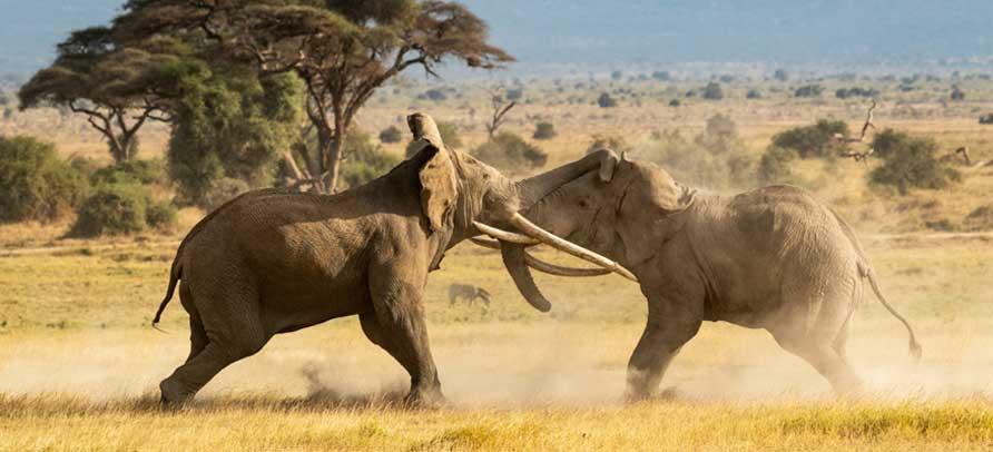 6 Days Kenya Wildlife Adventure Safari