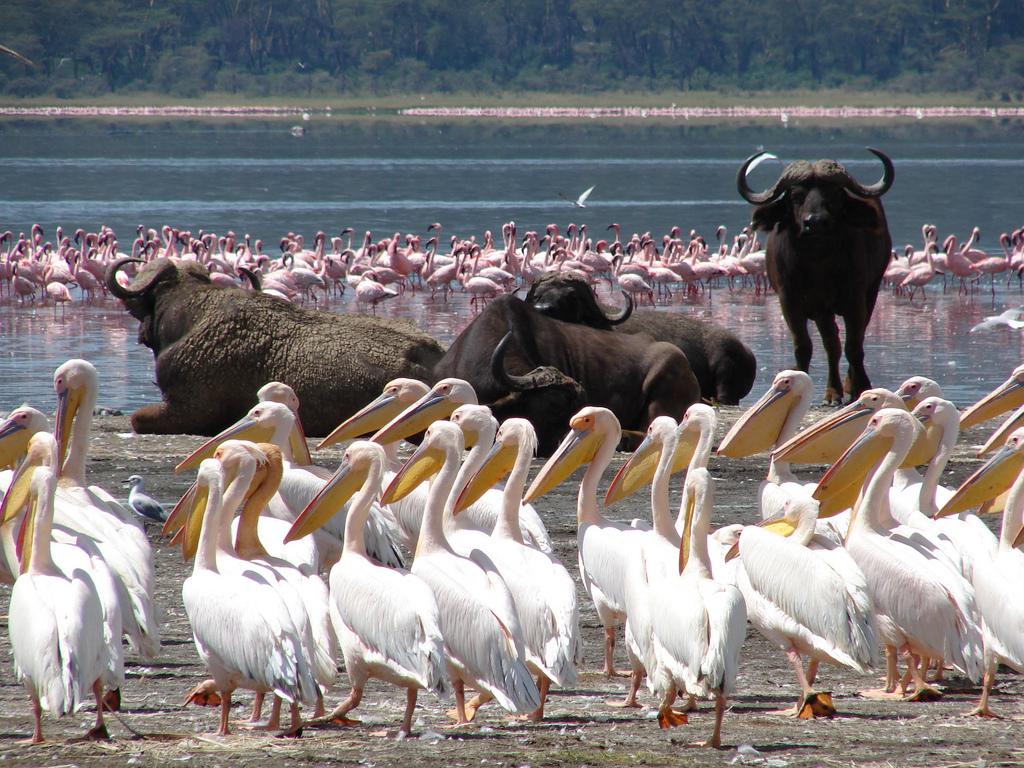 5 Days Amboseli, Lake Naivasha, & Lake Nakuru Wildlife Safari