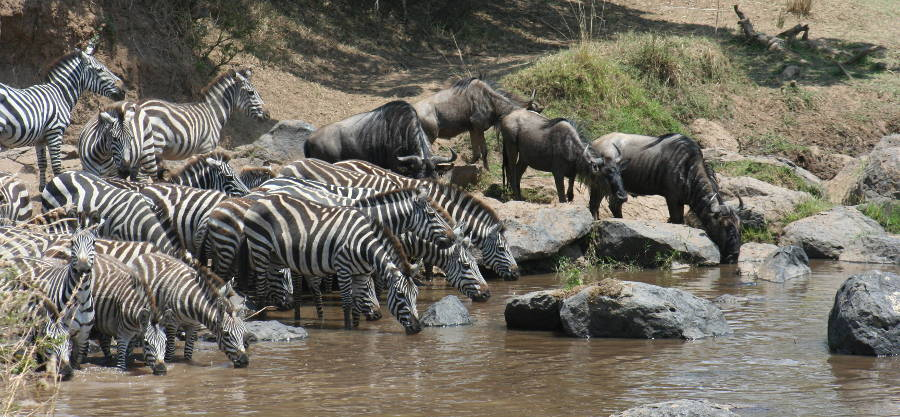 10 days Kenya Wildlife safari tour