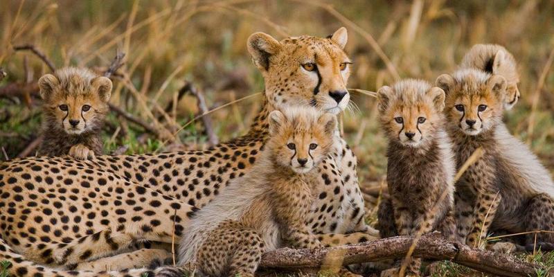 6 Days Best of Kenya Wildlife Safari