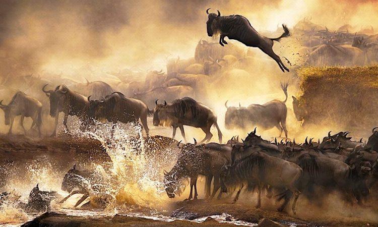 4 Days Masai Mara Wildebeest safari