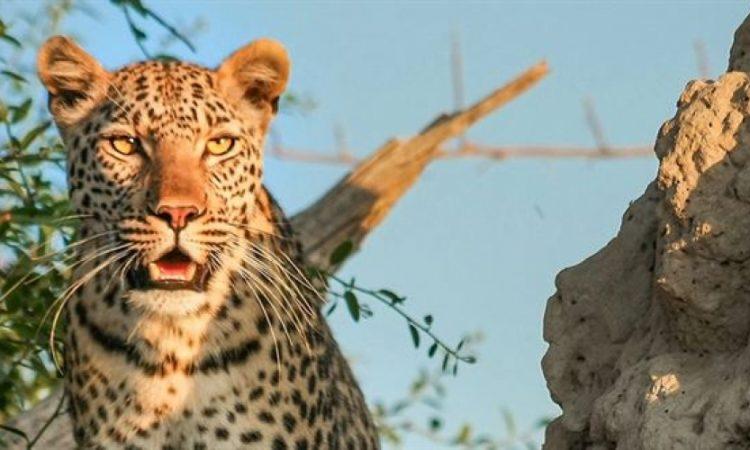 9 Days Kenya Wildlife & Zanzibar tour