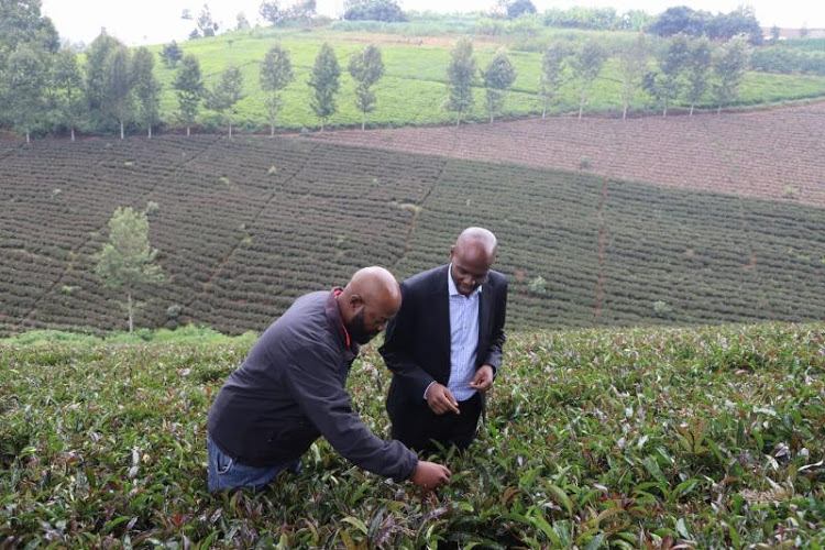 Kenya Launches Farm Tours