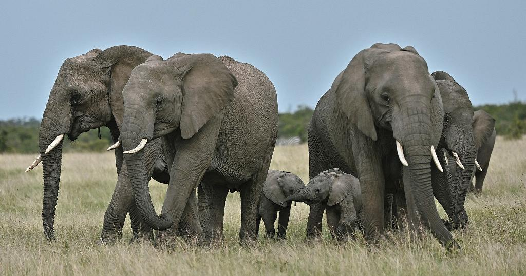 Kenya: Elephant naming ceremony 2021