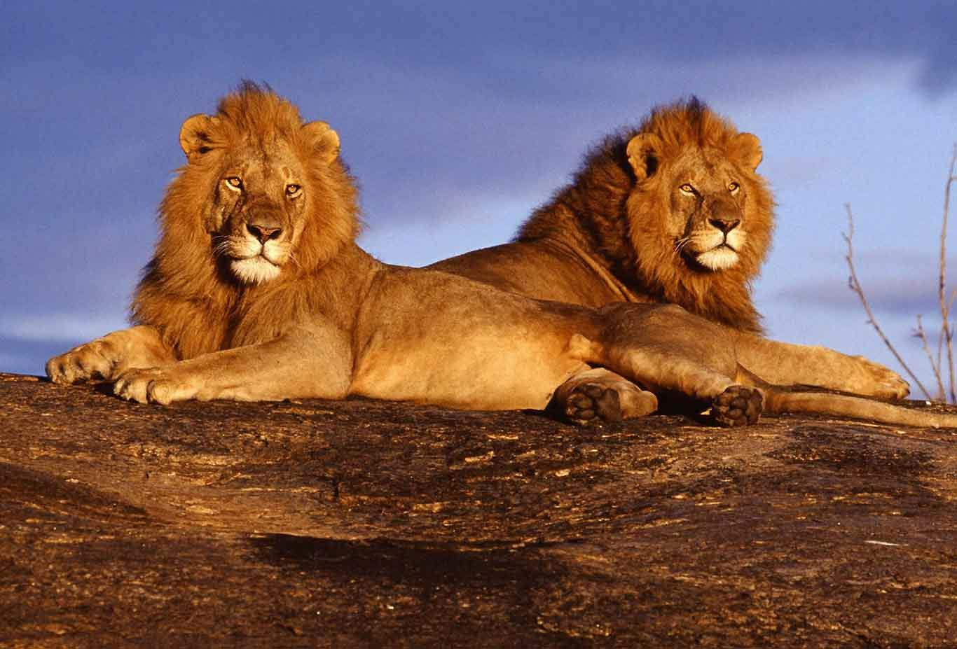 5 days Tsavo and Amboseli wildlife safari