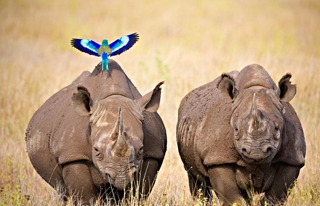 8 days Kenya Wildlife safari tour