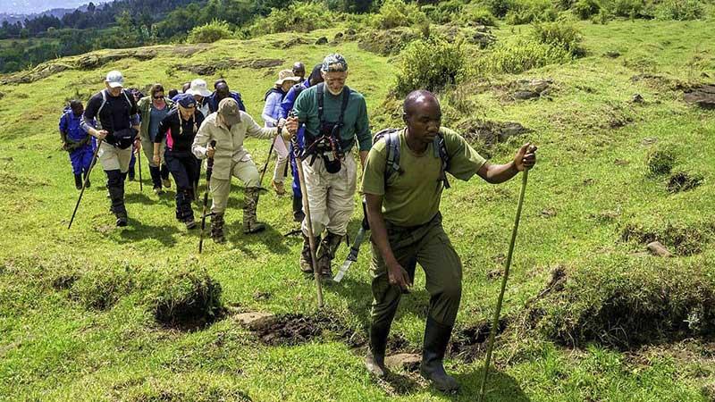 8 days Primate Safari Rwanda & Mount Karisimbi Hike
