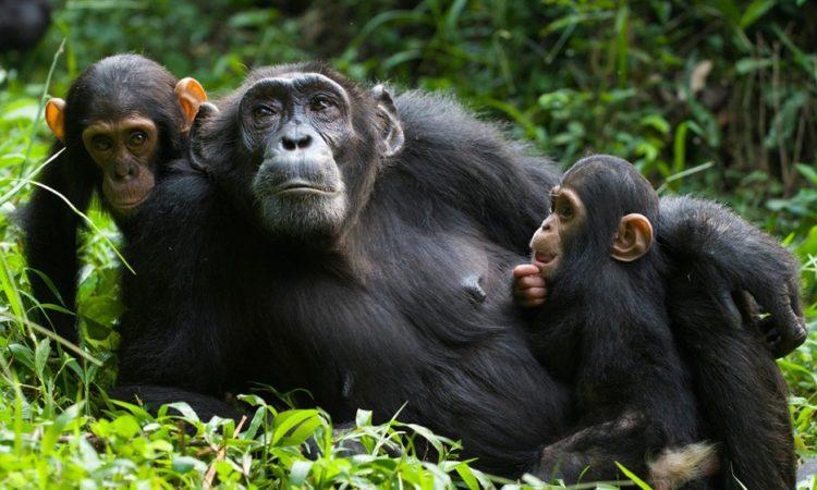 6 days primate safari Rwanda