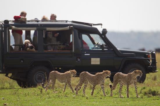 6 days Maasai Mara (Naboisho conservancy) safari