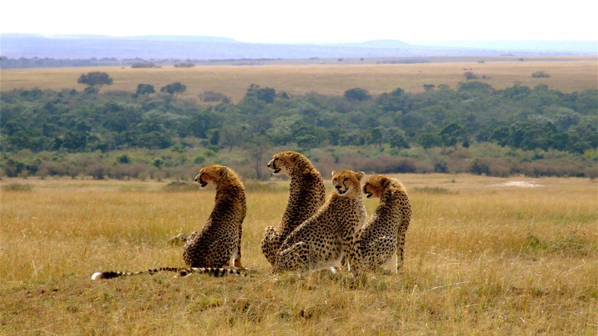 Maasai Mara National Reserve Kenya travel information